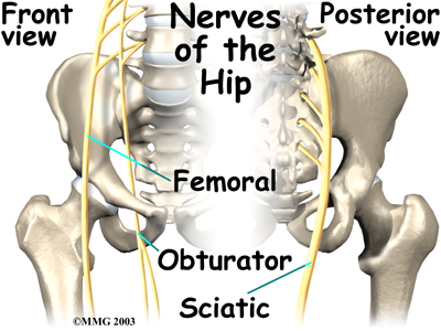 hip_anatomy_nerves01